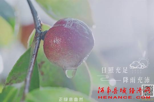 《信阳山茶油》公益广告